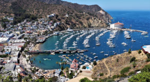 Catalina island, David Dickstein
